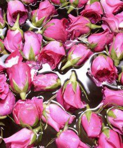 Nước hoa hồng (Organic)